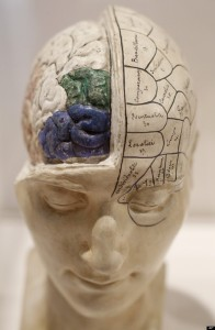 French Phrenological Model. Alastair Grant, Huffington Post. Copyright 2014
